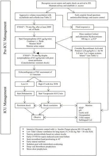 algorithm for management of patients presenting with severe sepsis andSevere Sepsis Algorithm
